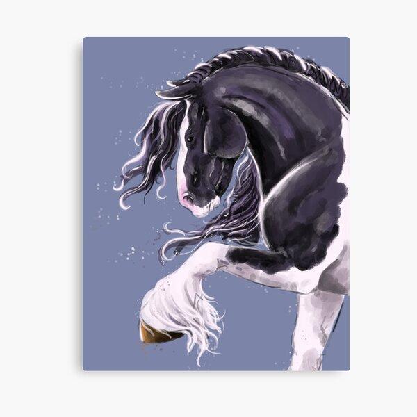 Gypsy cob horse  Canvas Print
