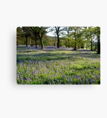 Bluebell Woods, Ilkley, Yorkshire Canvas Print