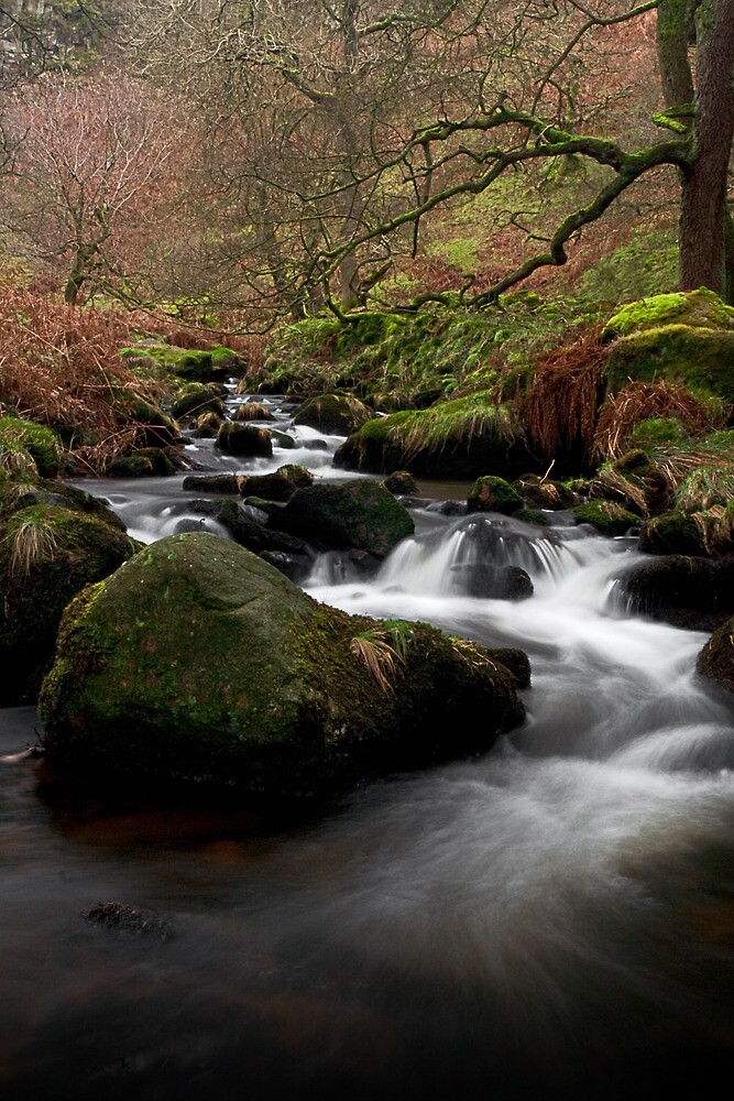 Waterfall Gill, Yorkshire Dales by Jim Round
