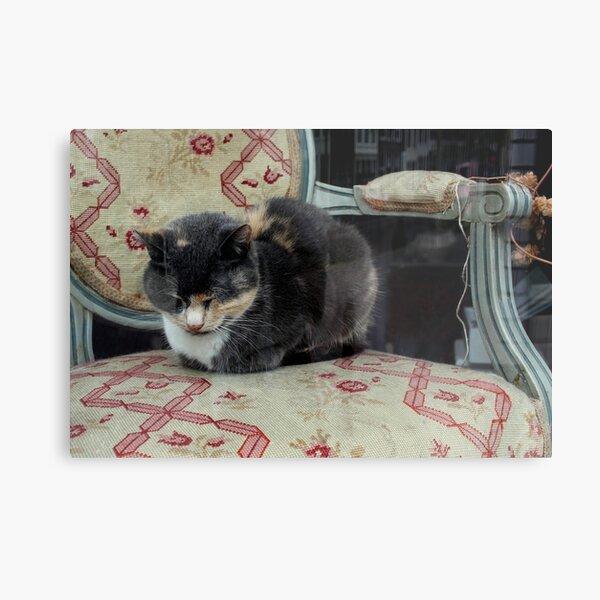Antique Shop Window Cat Metal Print