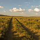 Wyoming Road - Bring Your Four-Wheel Drives by aprilann