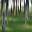 Trees in abstract by PenelopeLawry