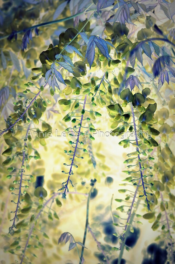 Wisteria by Annie Lemay  Photography