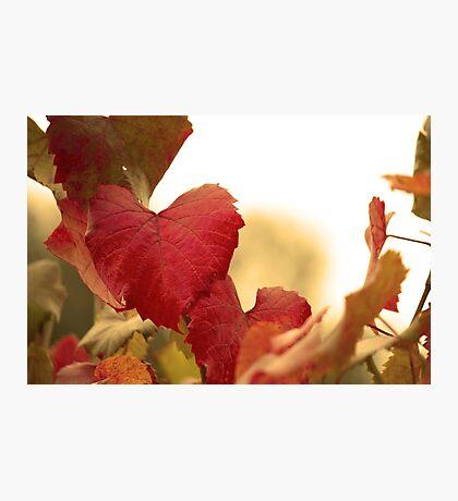 Golden Autumn Heart  Photographic Print