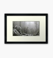 A Forest of Ash and snow  Framed Print