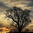 middlesex plains sunset 1# by phillip wise