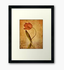 The Tulip Framed Print