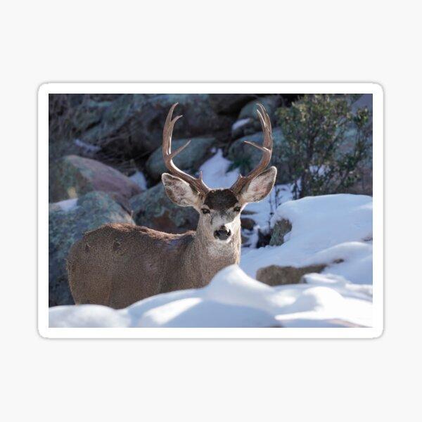 Mature Buck in a Snowy Landscape Sticker