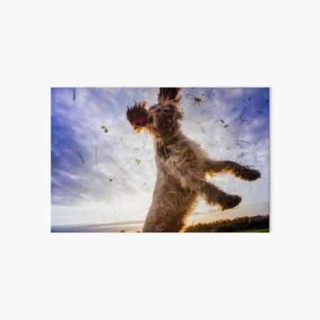 Leaping for clover Spinone Art Board Print
