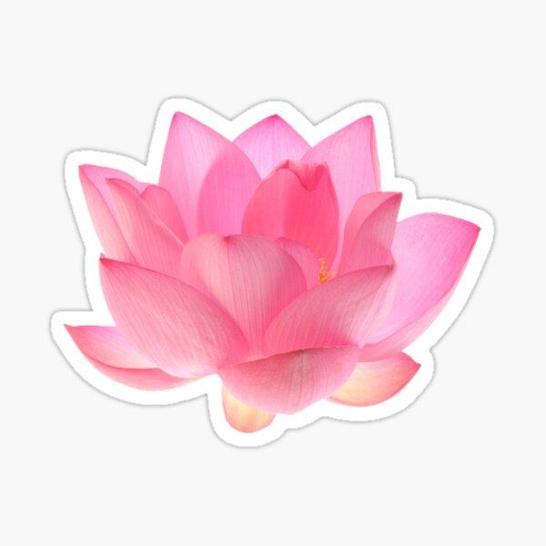 rosa Lotus Sticker