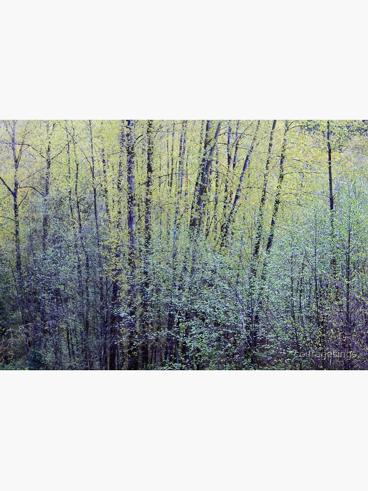 Spring Forest Trees2 by couragesings