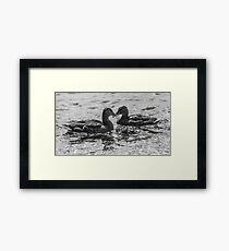 Mallard Crossing Framed Print