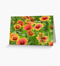 Morning Indian Blankets - Wildflowers Greeting Card