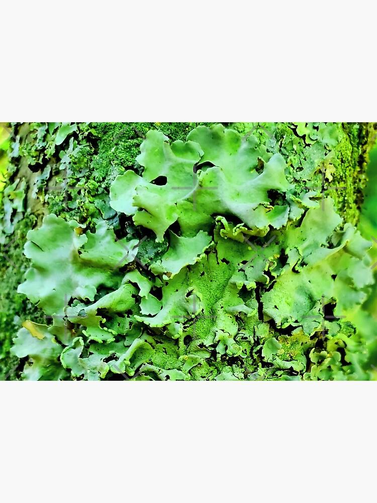 I lichen you 3! Classy Camo by dreamie09