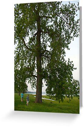 Boys by a Big Tree by Paula Betz