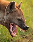 You're killin me!!! by Explorations Africa Dan MacKenzie