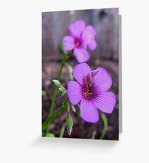 Beautiful Bee on Oxalis Flower Greeting Card