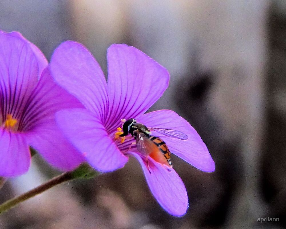 Busy Little Bee by aprilann