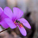 Busy Little Bee by aprilann
