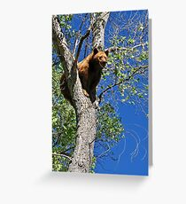 Hang in there Greeting Card