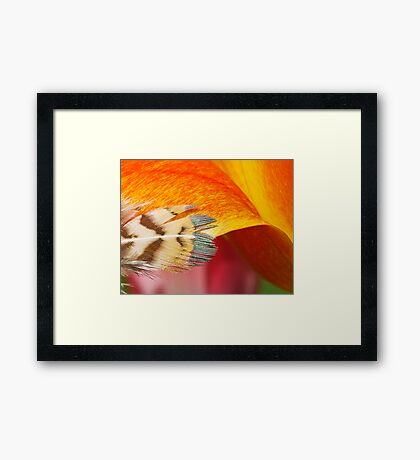 Touchy-Feely Framed Print
