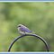 Blue Birds ~ Peace Love  and Tranquility