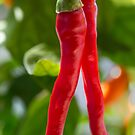 From My Garden - Paprika by Sandra Chung