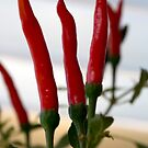 From My Garden - Chilies by Sandra Chung