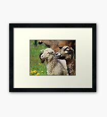 Spring Meadow & Sheep Framed Print