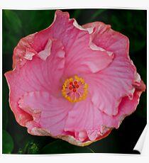 Pink macro Poster