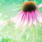 Echinacea by Diane Johnson-Mosley