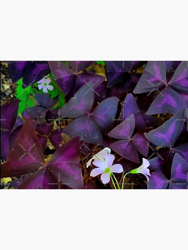 Purple Merlot clover by dreamie09