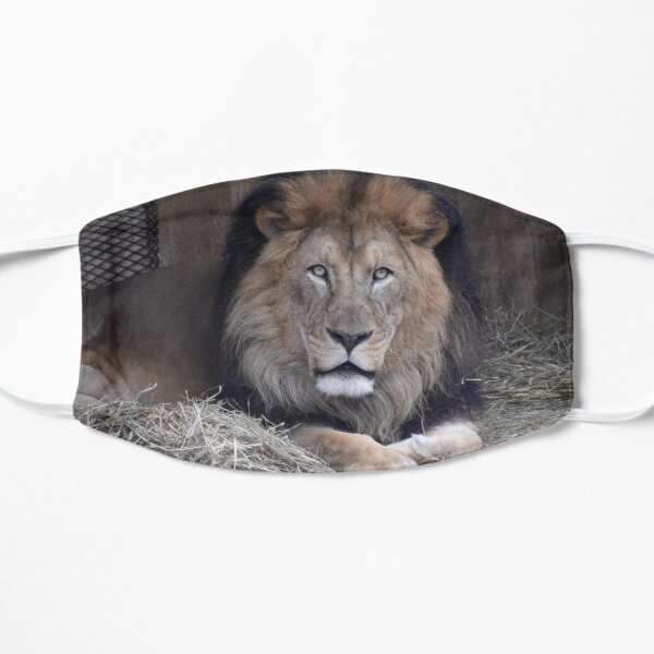 Luke the African Lion at the National Zoo Flat Mask