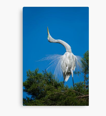 Salute to a Loved One Canvas Print