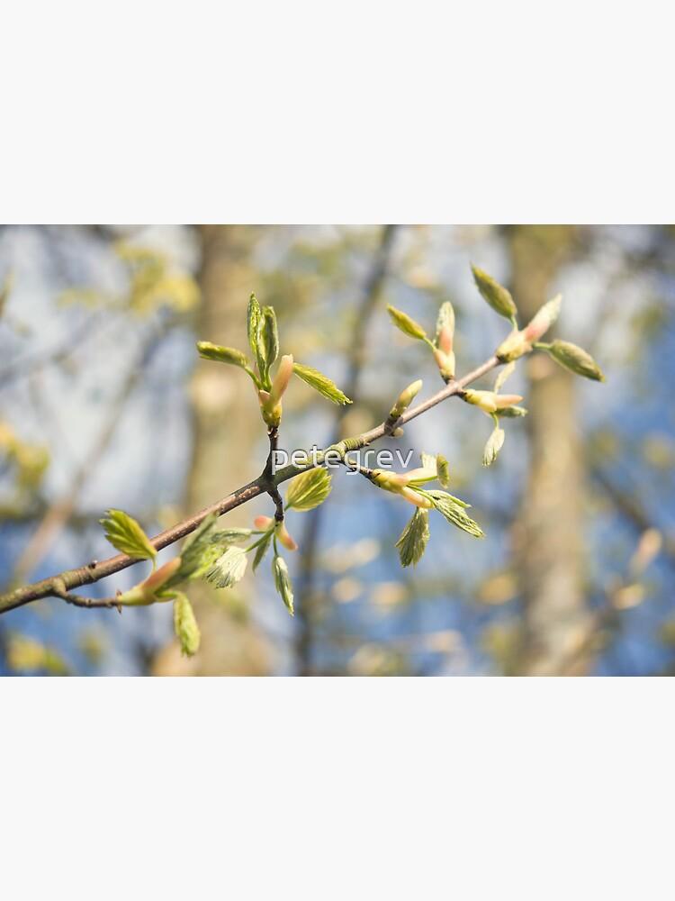 Day 291 - 26th April 2012 by petegrev