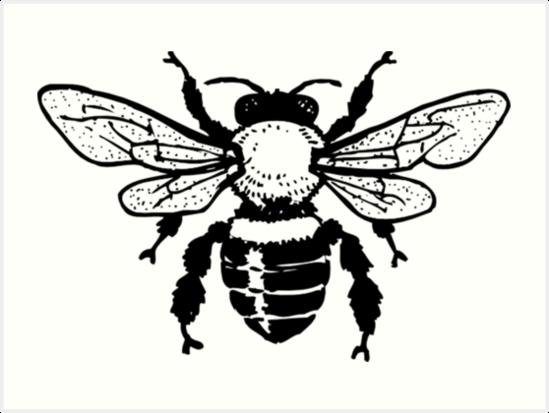 Vintage Honey Bee Illustration Art Prints By Shabzdesigns Redbubble