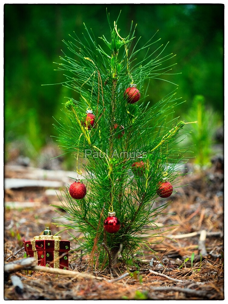 Little Christmas Tree by AmyesPhotograph