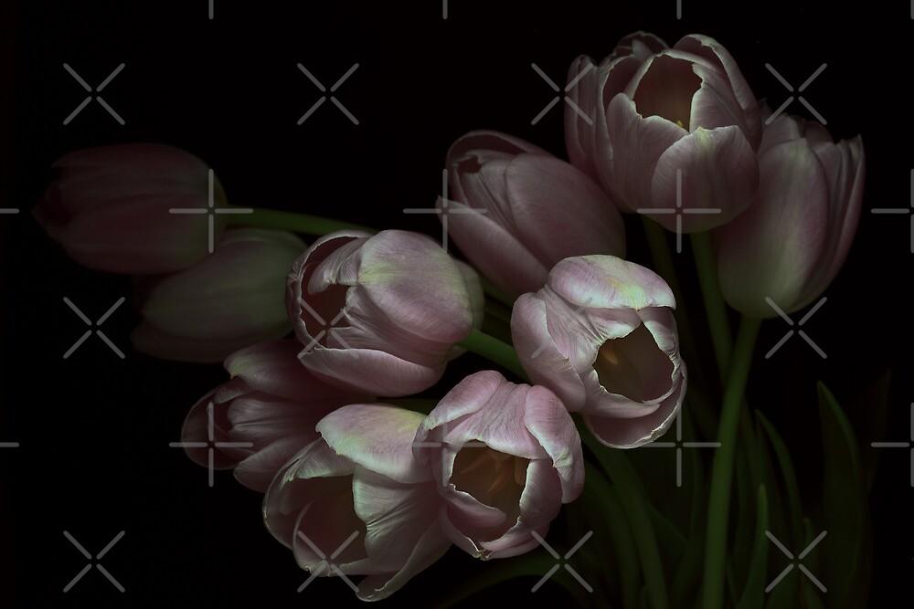 Tulips for Ana by EbyArts