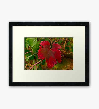 """""""Autumn In The Vines"""" Framed Print"""