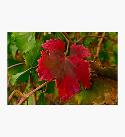 """Autumn In The Vines"" Photographic Print"