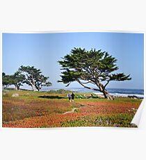 Morning Jog In Monterey Poster