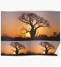 Collage of Three Boab Trees at Sunset Poster