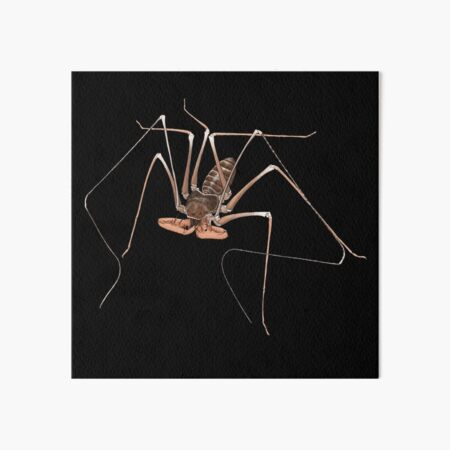 Acanthophrynus coronatus whip spider portrait  Art Board Print