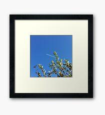 clear sky Framed Print