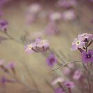 Tiempo de primavera by Thefotolion