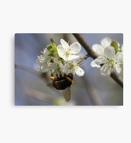 Bee In Spring Canvas Print