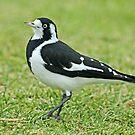 Proud Bird by Robert Abraham