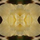 White Star by kfurniz