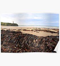 ballybunion seaweed Poster