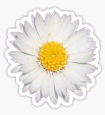 Top View of a White Common Daisy Isolated on Black Sticker